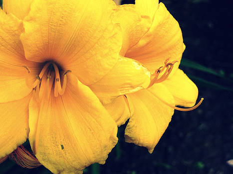 Yellow Flower by Terry and Brittany Sprinkle