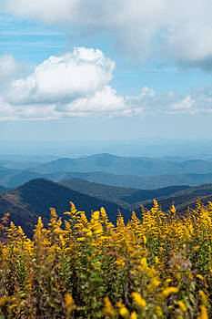 Yellow flowers along the Blue Ridge Mountains by Kim Fearheiley