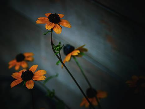 Yellow Flowers by Rachel Mirror