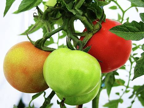 Yellow Green Red by Maneesh  Kumar