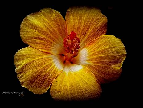 Yellow Hi by Kathy Barney