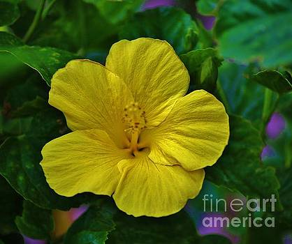 Yellow Hibiscus by Craig Wood