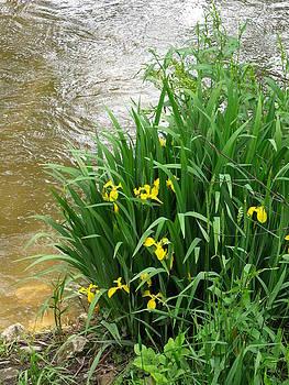 Yellow Iris by Anna Villarreal Garbis