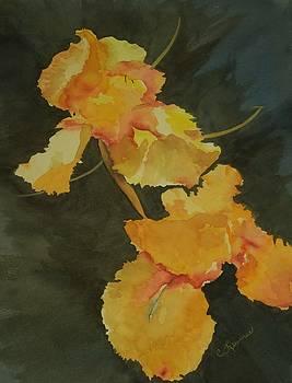 Yellow Iris by Constance Larimer