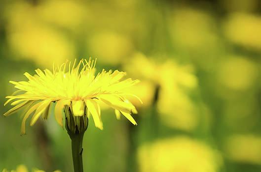 Yellow by Jeremy Sage