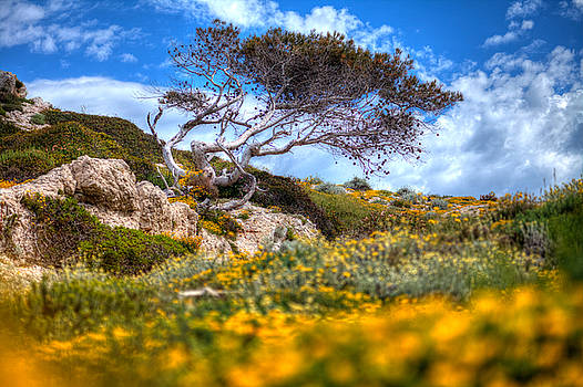 Yellow by Karim SAARI