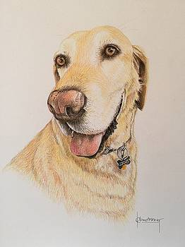 Yellow Lab by Denise Armstrong