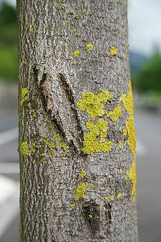 Lichen 2 by Colleen Williams