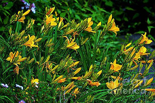 Susanne Van Hulst - Yellow Lily Flowers