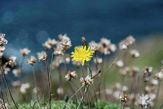 Yellow by Martina Fagan