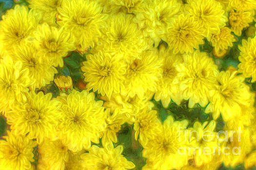 Yellow Mums by Marion Johnson