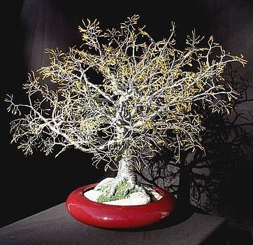 Yellow Oak - Wire Tree Sculpture by Sal Villano