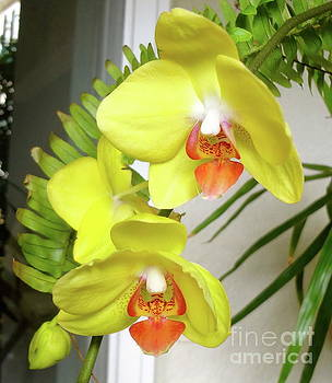 Yellow Orchid by Jenny Lee