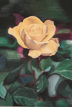 Yellow Rose by Andrea Inostroza