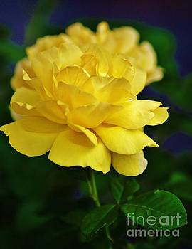 Yellow Rose by Craig Wood