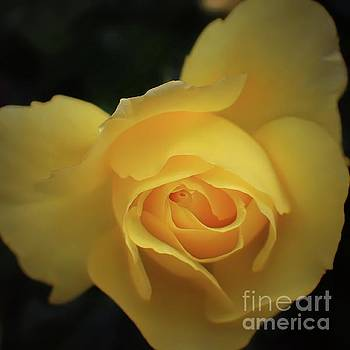 Yellow Rose Garden two by Ella Kaye Dickey