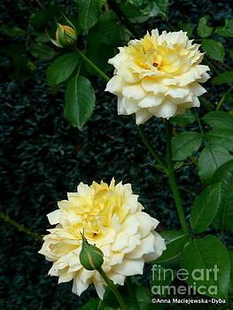 Yellow Rose Midas Gold 5 by Anna Folkartanna Maciejewska-Dyba