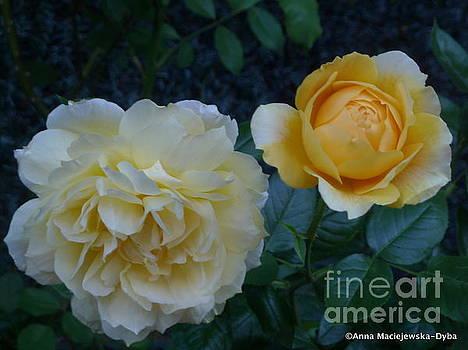 Yellow Rose Midas Gold by Anna Folkartanna Maciejewska-Dyba