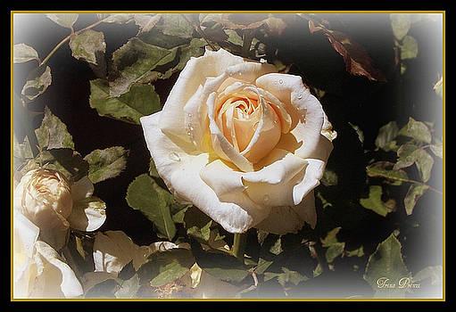 Yellow Rose of Texas by Trina Prenzi