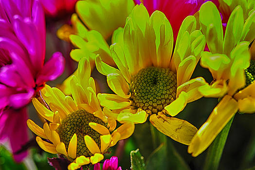Cindy Boyd - Yellow Spring daisies