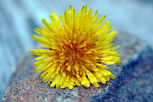 Linda Sannuti - Yellow Spring