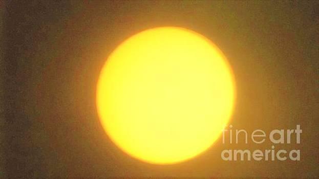 Yellow Sun by John Williams