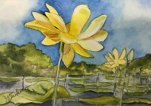 Yellow Sunshine by Jean Blackmer