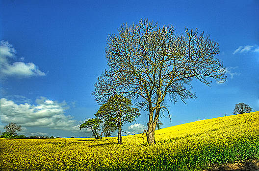 Yellow Tree Hill by Kim Shatwell-Irishphotographer