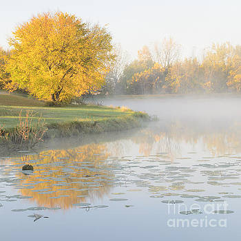 Yellow Tree Reflection on the Lake by Tamara Becker
