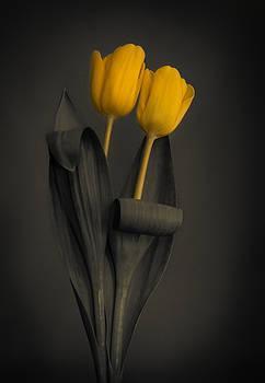 Yellow Tulips on a Grey Background by Eva Kondzialkiewicz