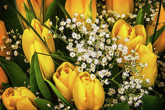 Yellow Tulips With Alyssum by Garry Gay