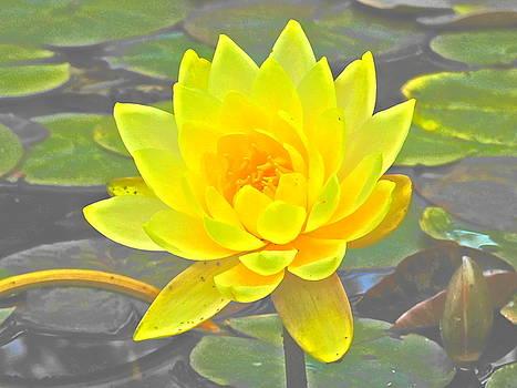 Yellow Water Lily Paint Effect  by Nancy Spirakus