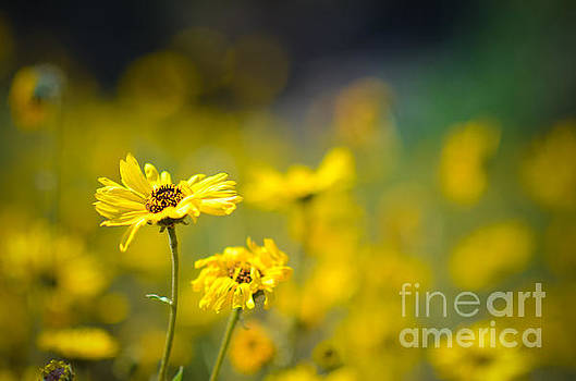 Yellow Wild Flowers by Kelly Wade