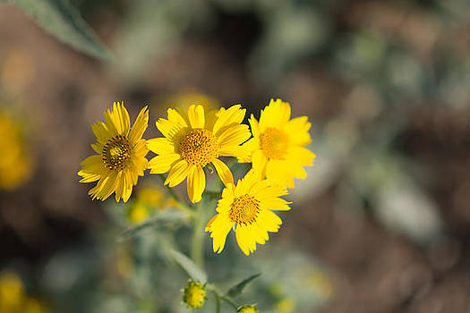 Yellow Wildflowers #2 by Sharon Wunder Photography