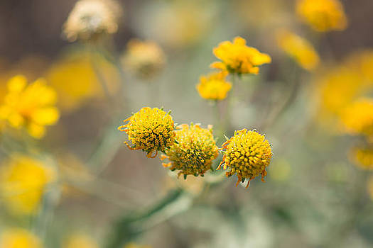 Yellow Wildflowers #3 by Sharon Wunder Photography