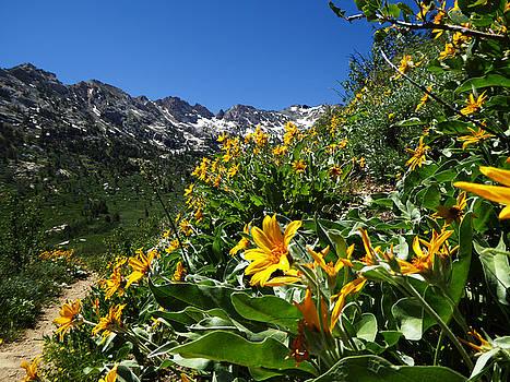 Yellow Wildflowers by Alan Socolik