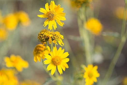 Yellow Wildflowers by Sharon Wunder Photography