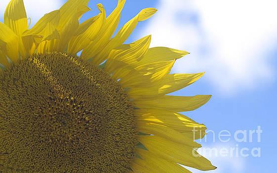 Yellowness Creates Happyness  by Tara Lynn