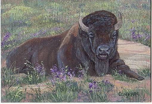 Yellowstone Bison by Peggy Conyers