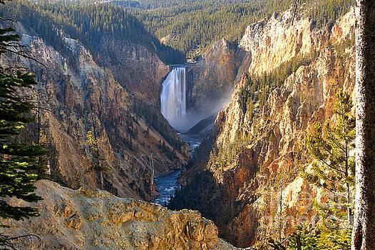 Adam Jewell - Yellowstone Falls Tree Frame