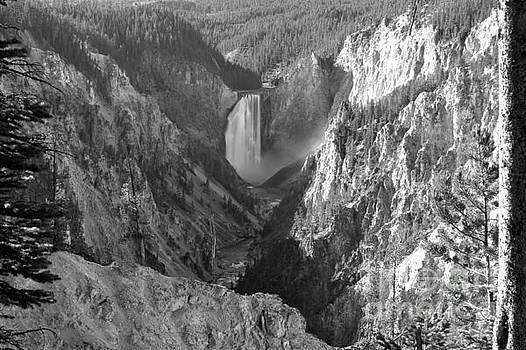 Adam Jewell - Yellowstone Falls Tree Frame - Black And White