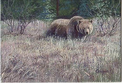 Yellowstone Grizzley by Peggy Conyers