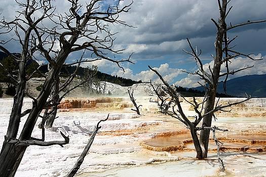 Yellowstone by KC Moffatt
