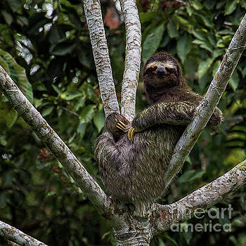 Yes This Sloth is High by Doug Sturgess
