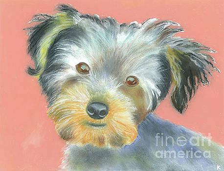 Yorkie by Aaron Koster