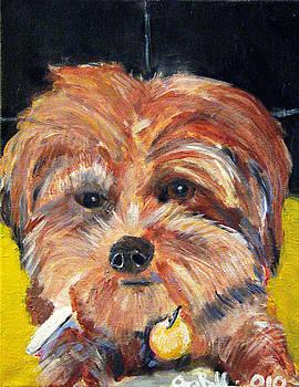 Jon Baldwin  Art - Yorkie Poodle