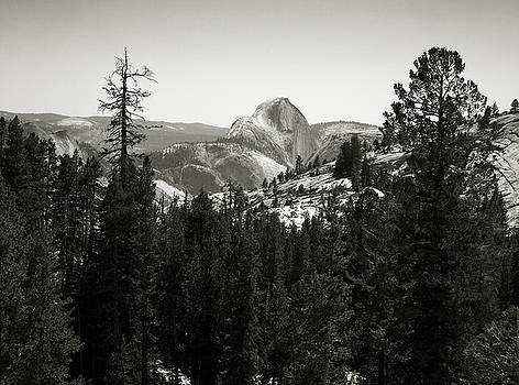 Yosemite National Park by Aurica Voss