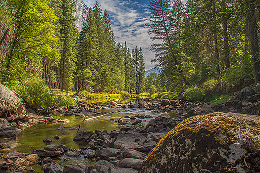 Yosemites N Park by Brian Williamson