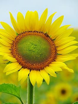 You Are The Sunshine of My Life by Lori Frisch