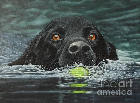 You Fetch It Next Time by Sid Ball